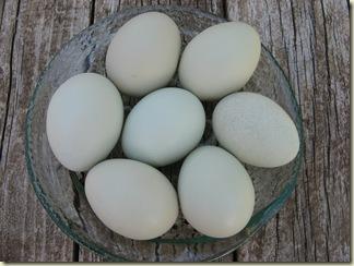 Green Eggs 002