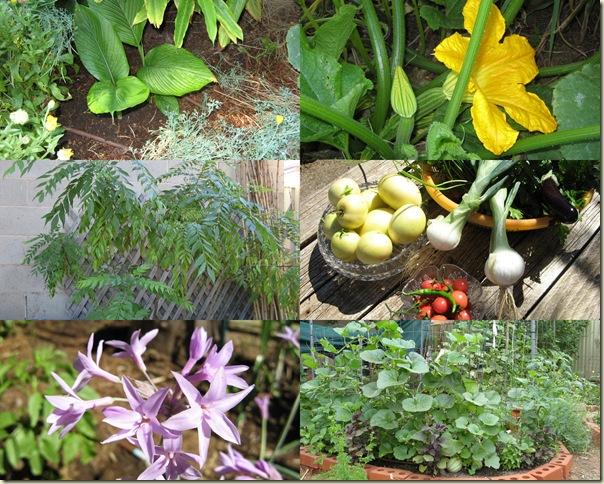December Garden 2009