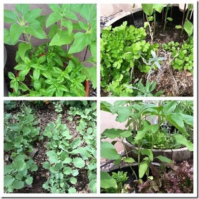 garden as of april 2011 c