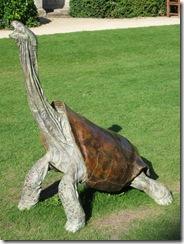 IMG_0086 Giant Tortoise