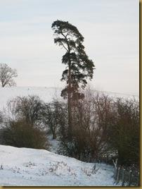 IMG_0012 Lonesome Pine
