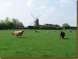 IMG_0025 Windmill