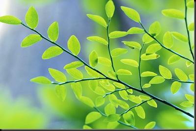 liquidation  administration forestry schemes