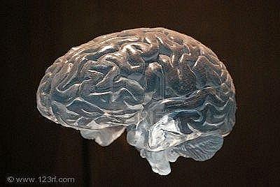 4207474-transparente-modelo-anat-mico-del-cerebro-humano