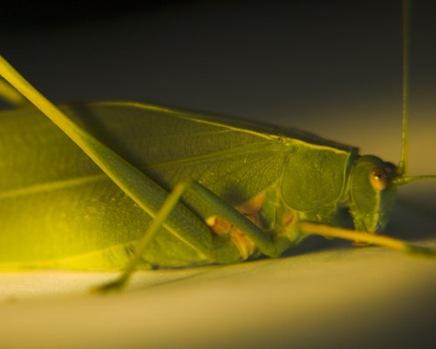 leafinsectshot2