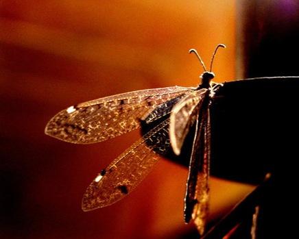 insectbyfuegomujer