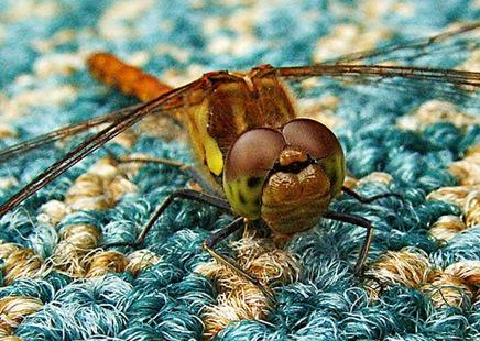 dragonflyz19789