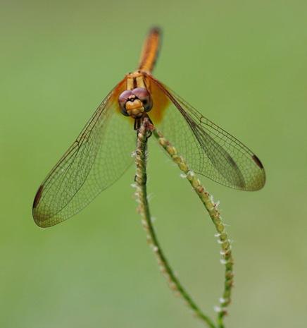 dragonflybycwye