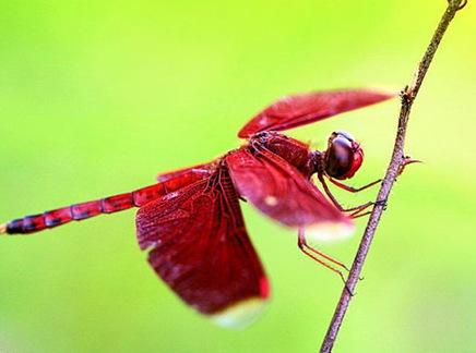 dragonflybylevoyageur