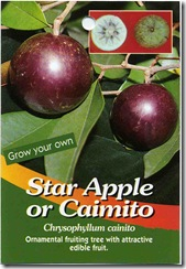 StarApple