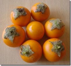 Solanum quitoense (3)