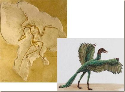 archaeopteryx2