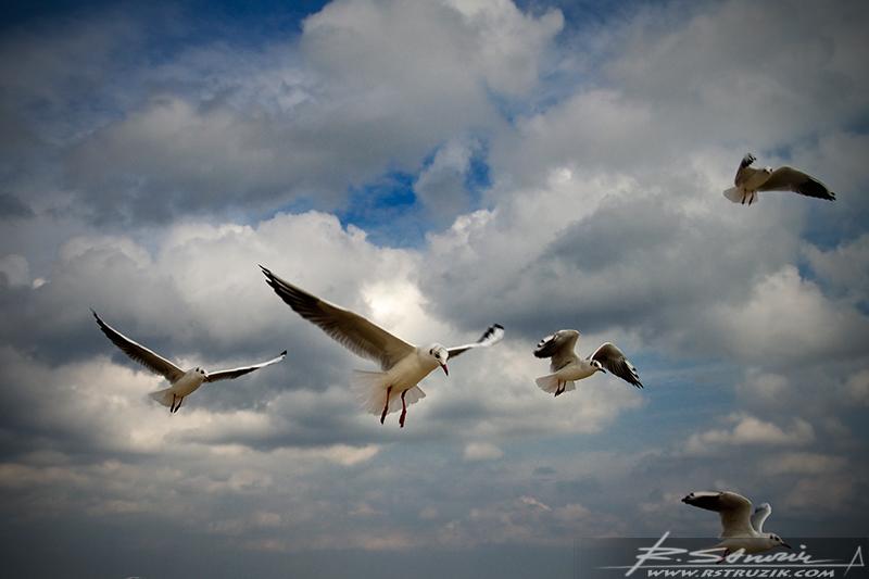 Sopot. Wrzesień 2010. Mewy tańczące na wietrze i walczące o choćby skrawek chleba.