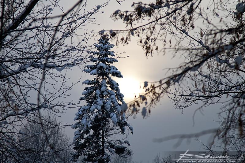 Sosnowiec, Park Sielecki. Rzut okiem na grudniowe słońce w sile listopada.