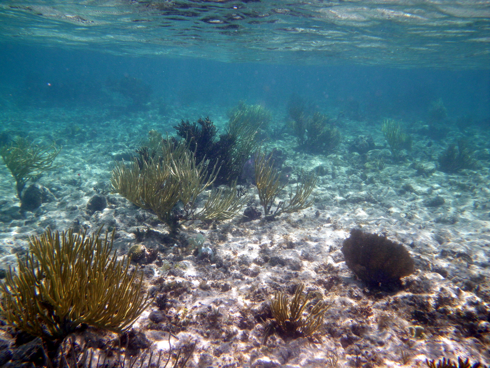 a look at the coral reef fish and how it readies a nest site How to breed clownfish of the development of coral reefs the live rock will provide the fish have hiding places and will a look out for the.