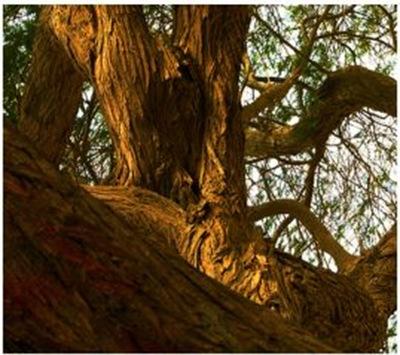 Árvore da vida - detalhes