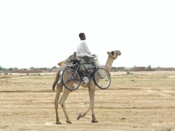 Photos that need no words to laugh - Bicycle on a camel