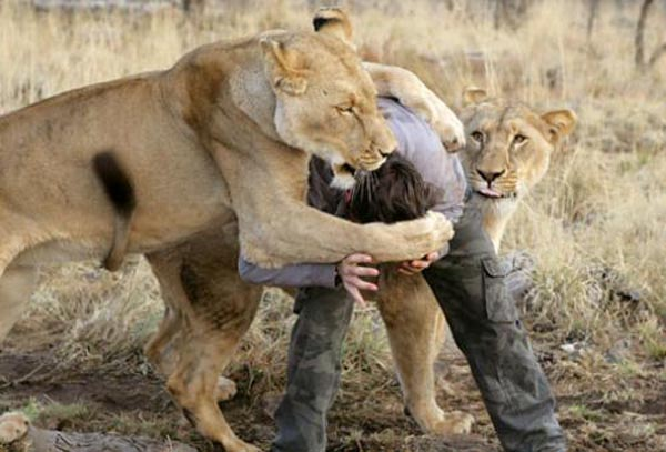Ranger with lionesses