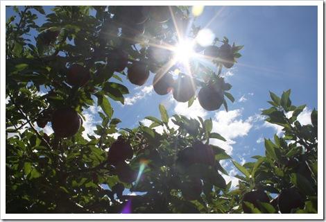 applesun