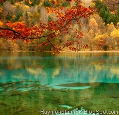 water-green-tree-red