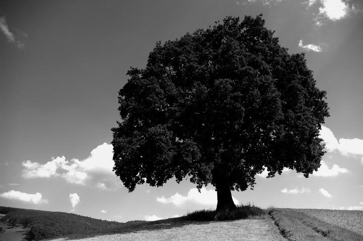 Baum in Brensbach Odenwald