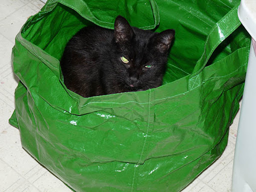 tiny black cat with demon green eyes in bright green plastic tote