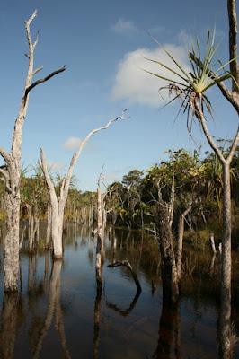Sheldon Lagoon Cape York