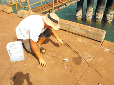 Seisia Pier Fishing, Cape York