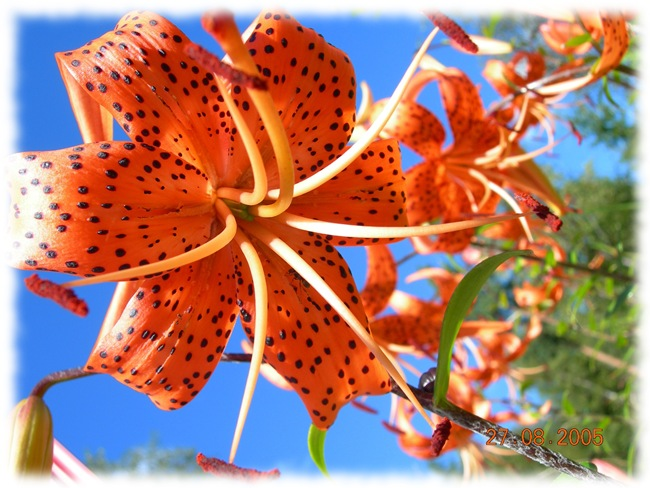 Blomst Løten