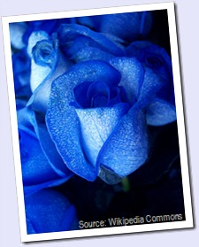 450px-Blue_rose-artificially_coloured
