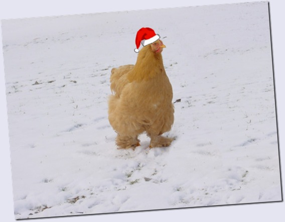 Baaawk, buck, buck!!!  (that's Merry Christmas in Chickenspeak)