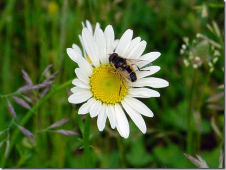 A Busy Bee!