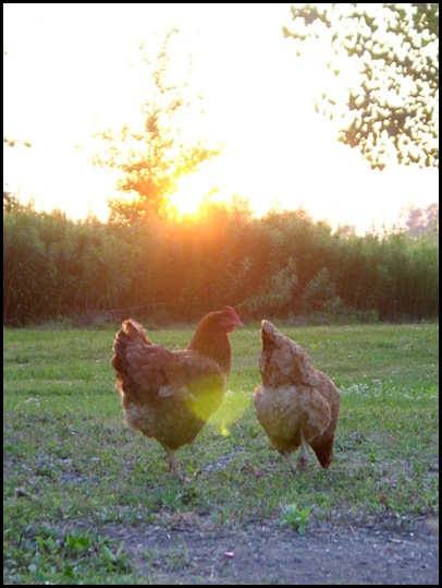 The Ladies at Sunset