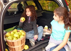 Age of Apples 2008