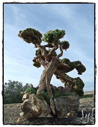 arbre paper
