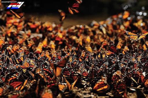 Hermosas fotografías de la migración de los animales