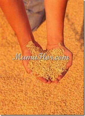 Importancia del Consumo del arroz…
