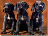 Dogs-wallpapers (165)