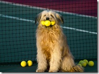 Dogs-wallpapers (163)