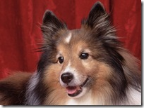 Dogs-wallpapers (161)