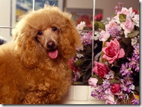 Dogs-wallpapers (148)