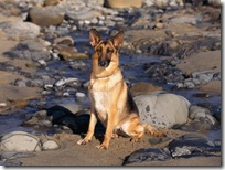 Dogs-wallpapers (146)