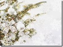 Christmas-new-year-wallpapers (29)