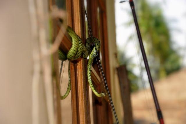 Змея на форточке утром прекрасного дня