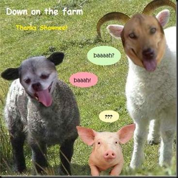 Loupeb lamb 2