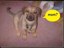 Baby Lou -- mom