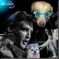 Elvis LouPeb 2