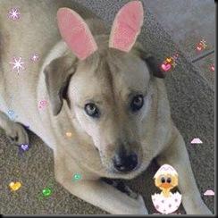 bunny ear 7