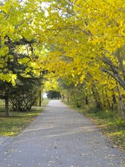 fall-walk6
