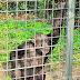 Schimpanse - Zoo Landau - © info@dester.de